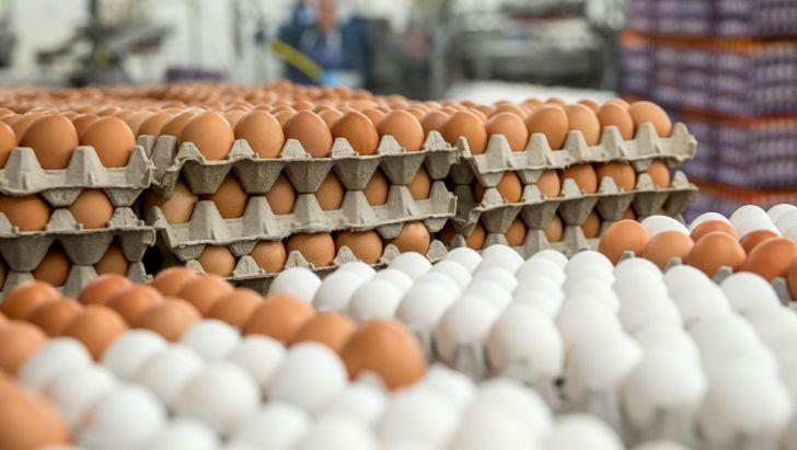 عراق واردات تخم مرغ از ایران را متوقف کرد