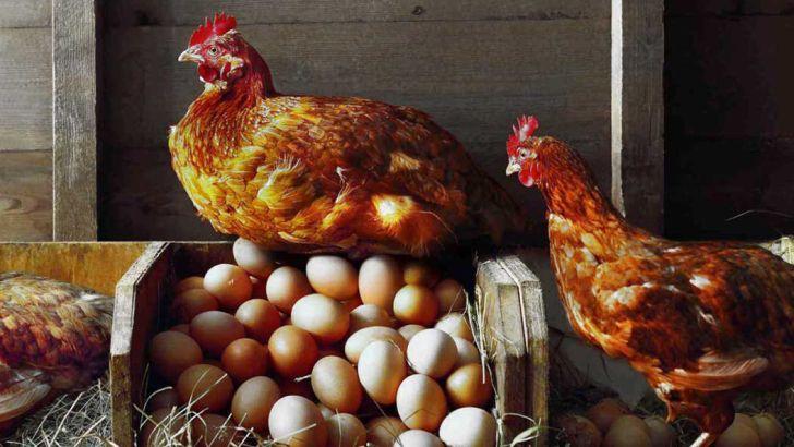 صادرات ۱۵هزارتن مرغ و تخم مرغ