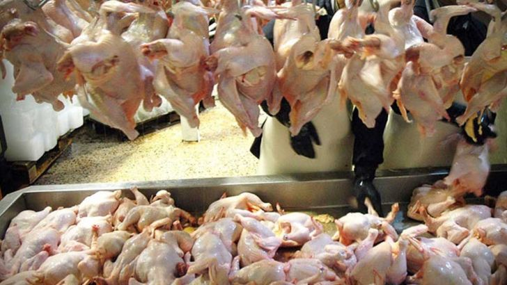 اجازه افزایش خودسرانه قیمت مرغ را به هیچ کس نمیدهیم