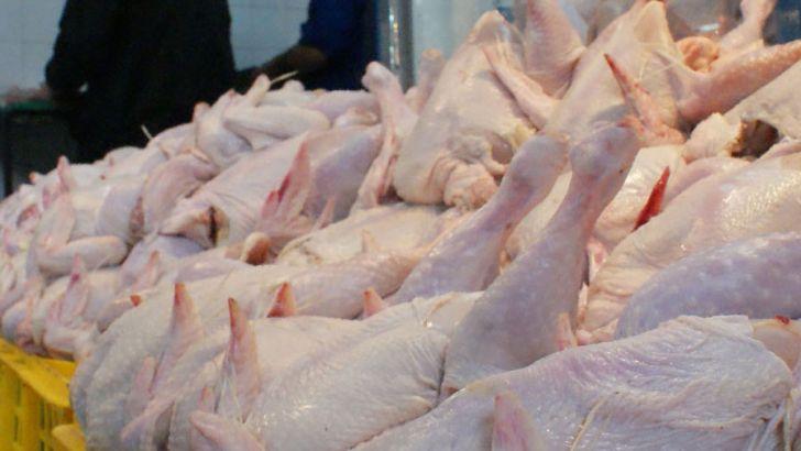قیمت مرغ باید متعادل شود