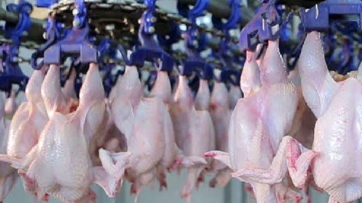 عرضه مرغ گرم به قیمت آزاد