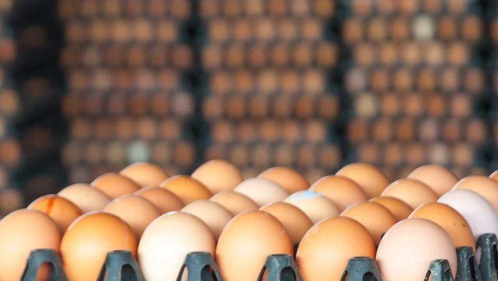 صادرات روزانه 150 تن تخم مرغ به عراق