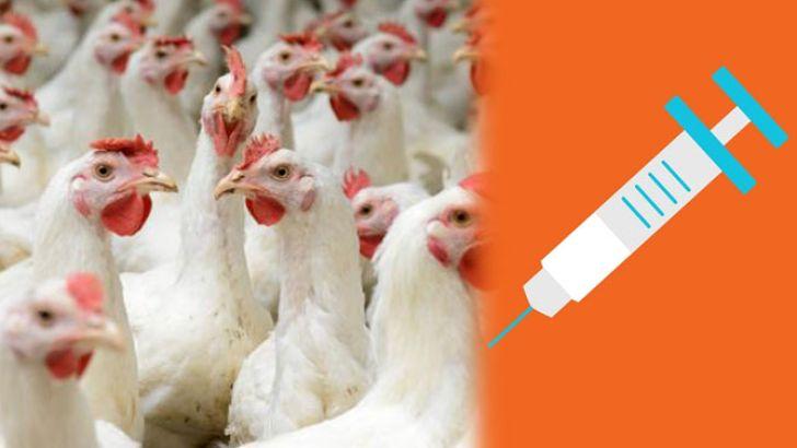 بازار واکسیناسیون طیور از رشدی چشمگیر خبر می دهد!