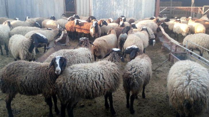 آدرس پایگاه های کمیته امداد برای ذبح گوسفند