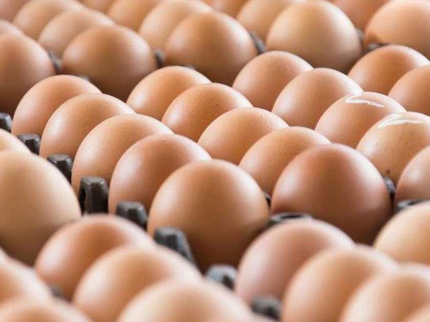 صادرات 11 هزار تن تخممرغ در 2.5 ماه