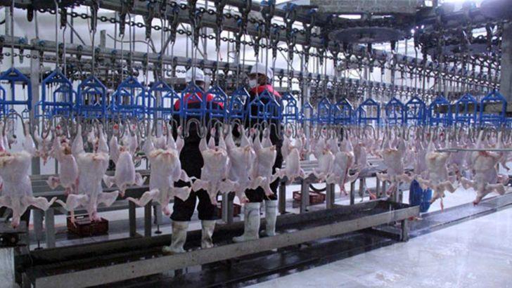 60  کشتارگاه بسیار پیشرفته و مجهز مرغ در کشور فعالیت دارد