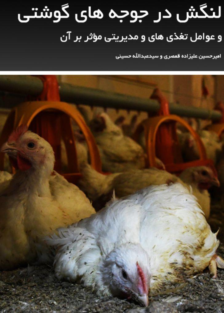 لنگش در جوجه های گوشتی و عوامل تغذیه ای و مدیریتی مؤثر بر آن