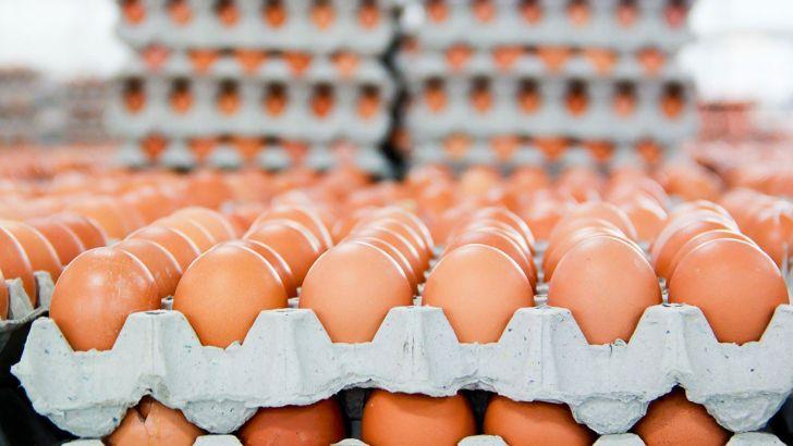 خرید تخم مرغ مازاد طبق مصوبه قبلی