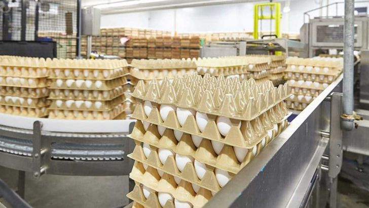 صادرات بیش از ۱۶۰۰ تن تخممرغ از آذربایجانشرقی