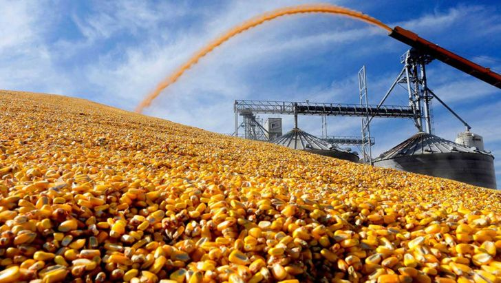 ورود محمولههای خوراک دام به بندرهای اصلی کشور