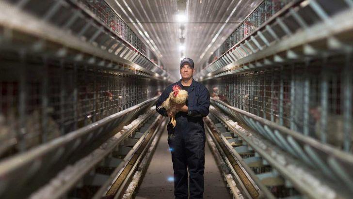 تولید بالا و کاهش قیمت تخم مرغ