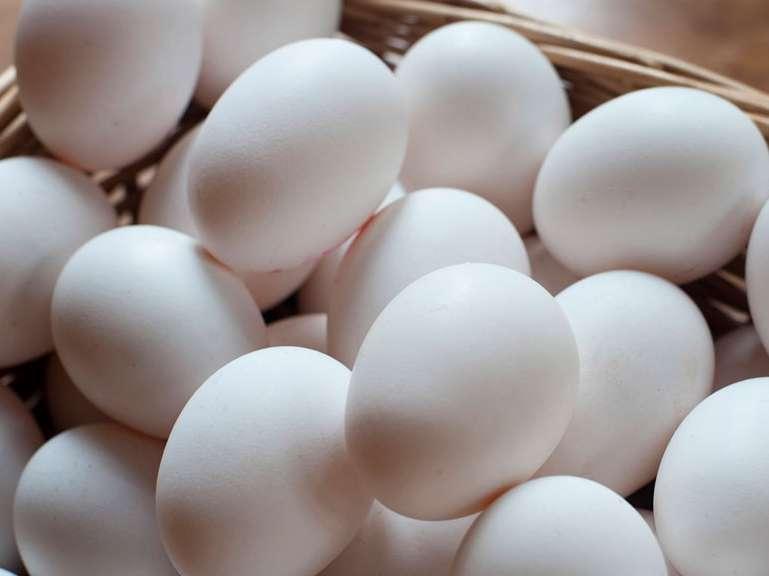 برنامهریزی برای افزایش ۱۰۰ هزار تنی تولید تخم مرغ با هدف صادرات