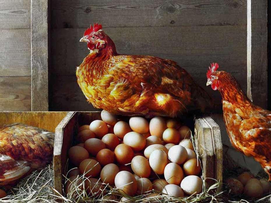 صادرات تخم مرغ متوقف شده است