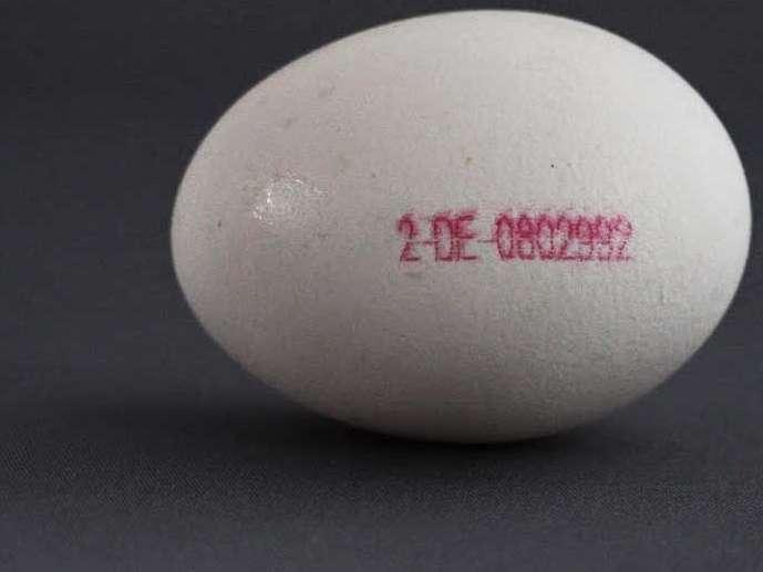 ۴۰۰ میلیون تومان هزینه دریافت مجوز  شناسنامه دار کردن تخم مرغ