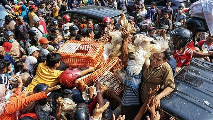 افت شدید قیمت مرغ در جاکارتا