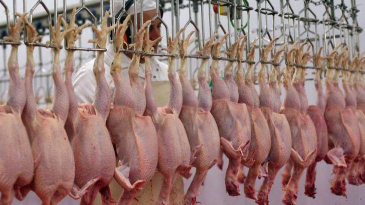 تحویل مرغ های مازاد به شرکت پشتیبانی امور دام