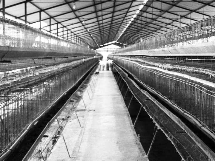 صنعت مرغ تخمگذار خراسان رضوی روزانه یک میلیارد ضرر میکند