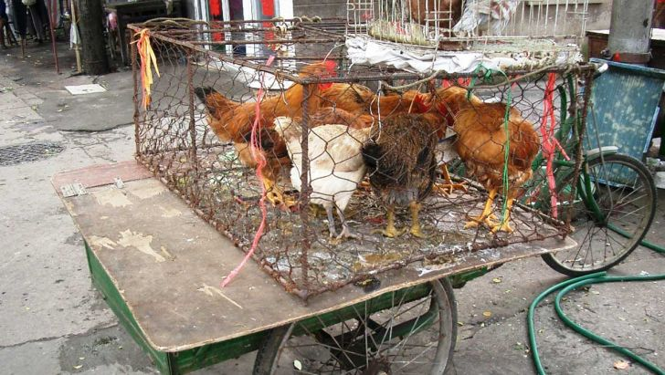 کمپین نه به مرغ زنده