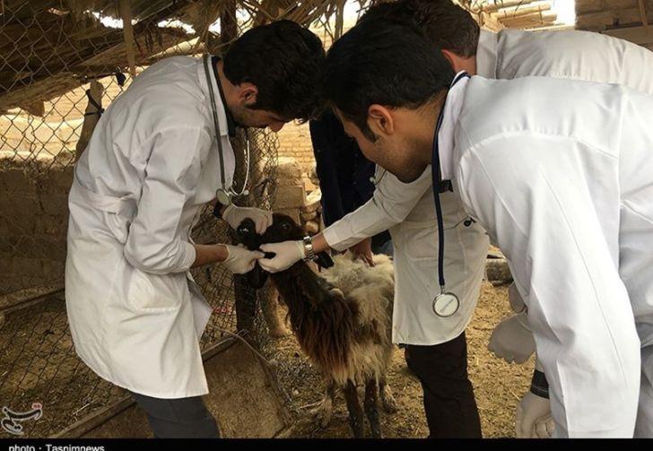 جذب ۵۰۰ مسئول فنی بهداشتی در دامداری و مرغداریهای استان تهران