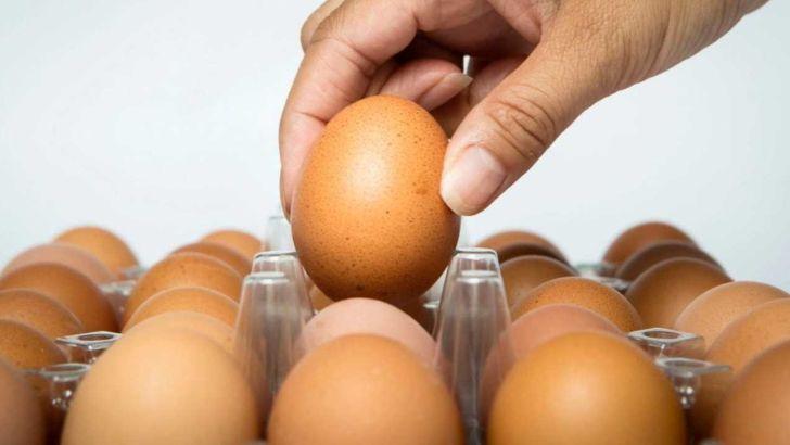 تشکل های مرغ تخمگذار و انفعال در فرهنگ سازی