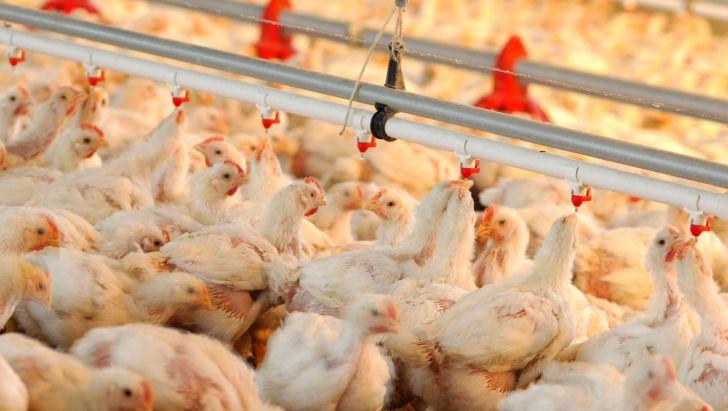 مرغ مازاد داریم، واردات نکنید
