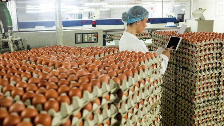 خریداری ۱۵۴تُن تخممرغ مازاد در خراسان رضوی