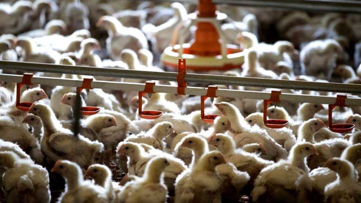 سه پیشنهاد برای جلوگیری از ضرر مرغداران