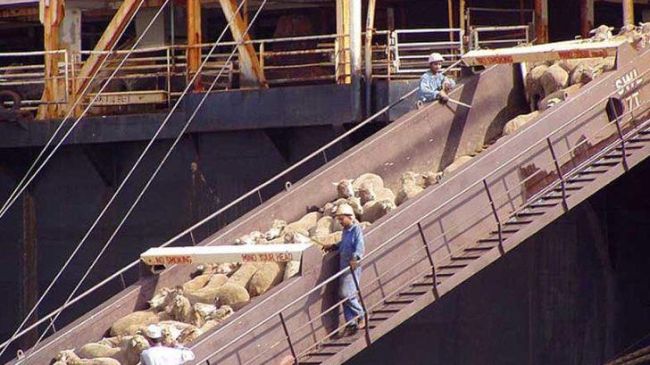 ۱۰۴ محموله دام و فراورده دامی از کردستان به خارج از کشور صادر شد