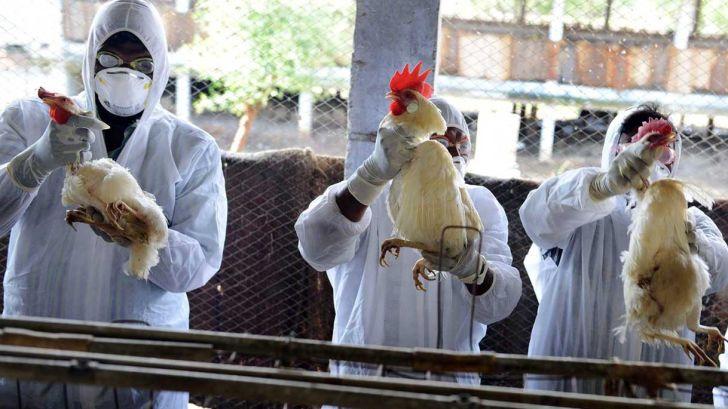 کنترل ۹۹ درصدی آنفلوآنزای فوق حاد پرندگان در سال جاری