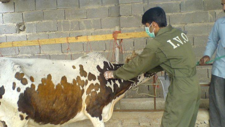 کانون بیماری تب برفکی در زنجان وجود ندارد