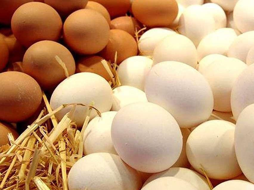 ثبات قیمت تخم مرغ طی یک ماه اخیر در بازار