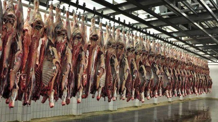 به دنبال خودکفایی گوشت قرمز