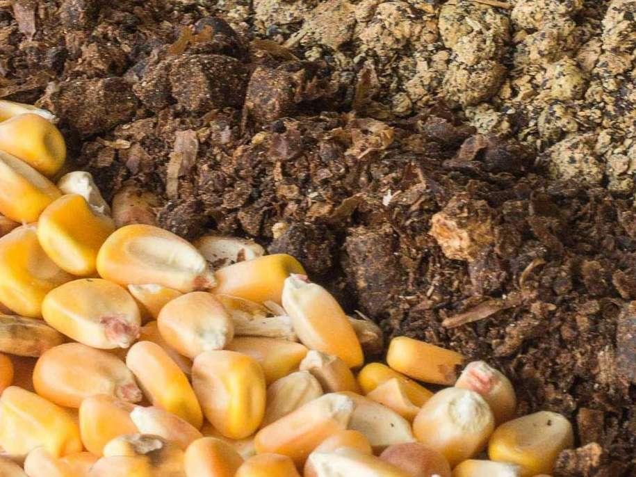 توزیع بیش از ۳۷ هزار تن نهادههای دامی بین روستاییان، کشاورزان و دامداران لرستان