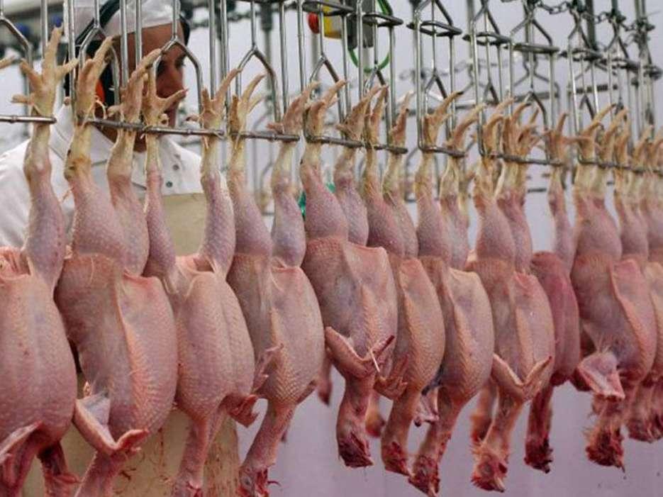 نیمی از مرغهای تولیدشده گیلان به دیگر استانها میروند