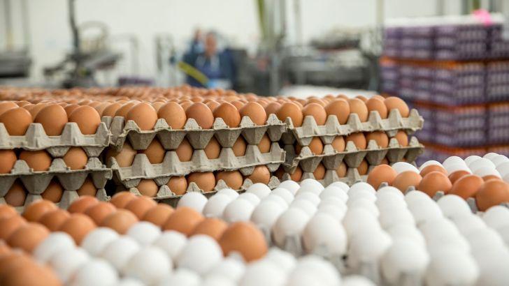 تخممرغ مورد نیاز شب عید تامین است
