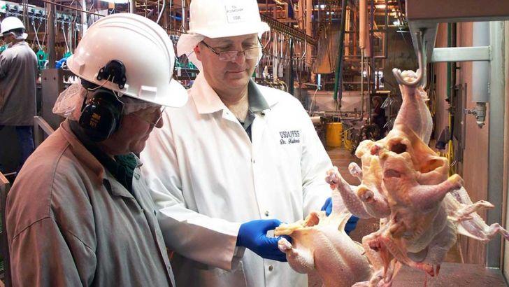 لزوم باز نگری در عنوان درجه بندی کیفیتی مرغ کشتار شده