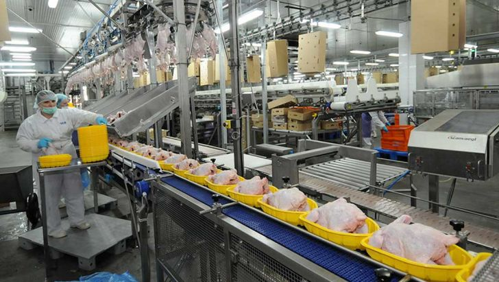 بستهبندی مرغ در سه دسته انجام میشود