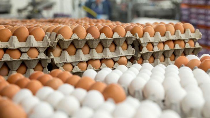 سالانه ۹۰۰ هزار تن تخممرغ در کشور تولید میشود