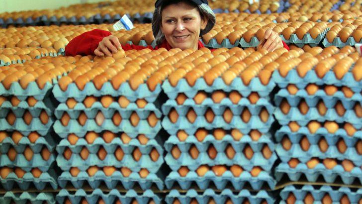 گرانی گوشت و افزایش 30 درصدی مصرف تخم مرغ