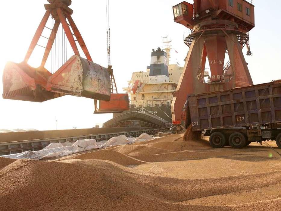 واردات ۱۲ میلیون تن نهاده های دامی به کشور در ۱۰ ماه