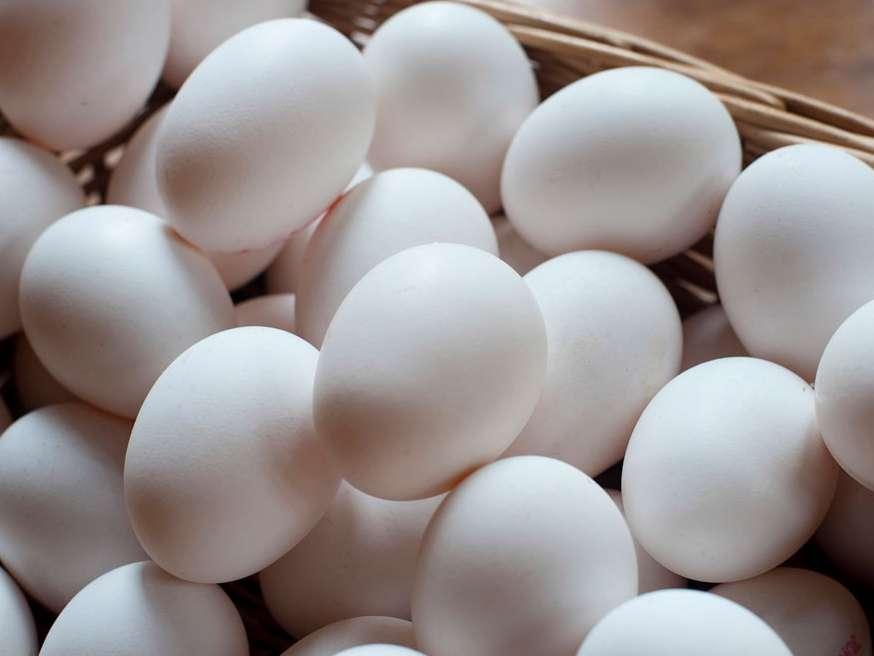 تخم مرغ گران نمیشود