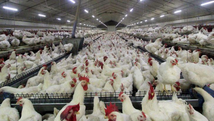 میزان تولید مرغ در کشور بسیار بیشتر از تقاضای بازار است