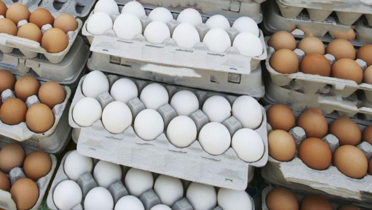 سبقت قیمت تخم مرغ از مرغ/از شوک گرانی تا ردپای صادرات بی رویه