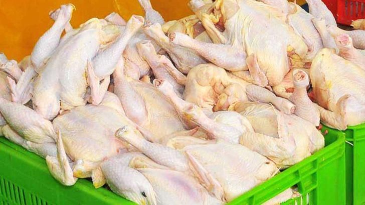 استمرار ثبات قیمت مرغ در بازار