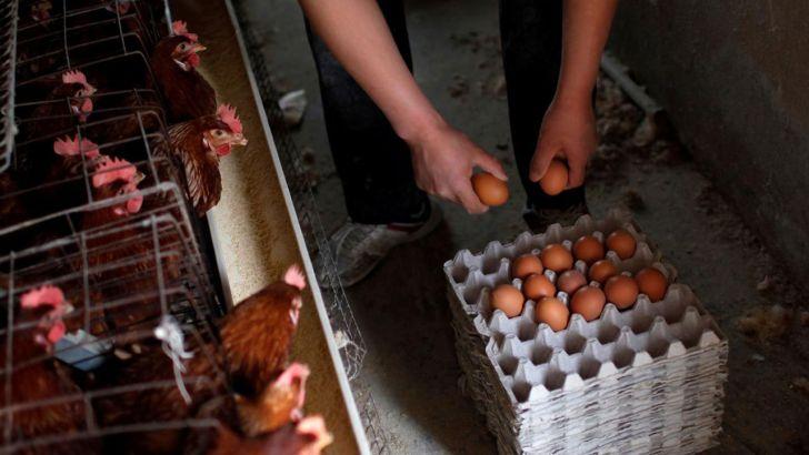 محدودیت های ویروس کرونا در استان هوبئی چین و استیصال مرغداران
