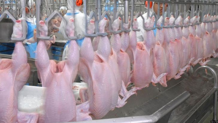 خرید مرغ مازاد تولیدکنندگان خراسان جنوبی برای تعادل بازار