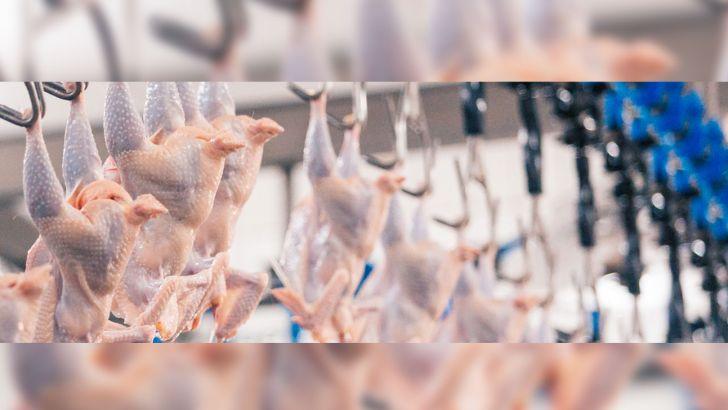 آیا صادرات مرغ درد مرغداران را دوا می کند؟