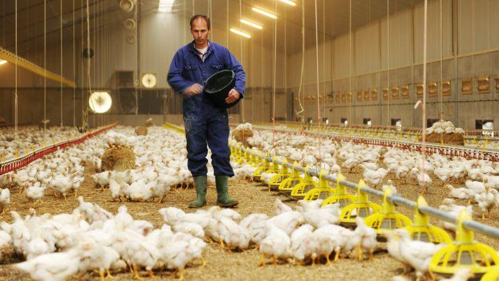 از مرغداران حمایت نشود، باید منتظر افزایش قیمت مرغ در تابستان باشیم