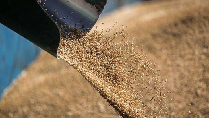 قیمت نهادهها در بازار به شدت افزایشی شده