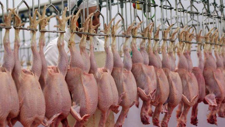 دخالت دولت در بازار رقابت مرغ